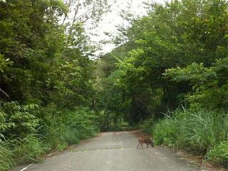 ヤンバルクイナに会いたい〜!!ヤンバルの森と川体験ツアー!
