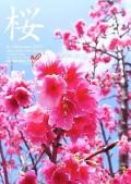 170117_sakura_pos_450