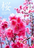 180122_Sakura_2