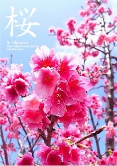 190118_Sakura_1_2