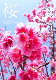 200111_Sakura_Pos_2